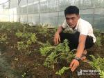 1 lá dương xỉ giá gần 3000 đồng, 8X mạnh dạn trồng luôn nhà màng
