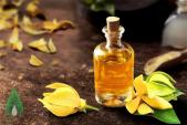 Dầu ylang ylang – Nguyên liệu làm đẹp chiết xuất từ những đóa hoàng lan