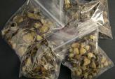 """""""Nấm thần"""", loại ma túy cực độc xuất hiện tại Việt Nam"""