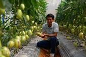 Lạc vào thế giới trồng nhiều loại quả siêu độc lạ của chàng kỹ sư trẻ