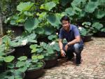 Tuyệt chiêu trồng sen một tháng đã