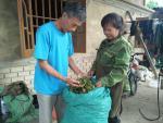 Dân bỏ ống vài chục triệu khi vào vụ thu hái hoa hồi