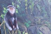 Kỳ thú làng bích họa phát sáng giữa núi rừng Quảng Ngãi