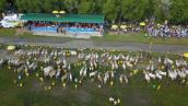 Ảnh: Đặc sắc Lễ hội đua bò Bảy núi tỉnh An Giang