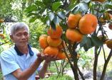Quýt hồng Lai Vung - đặc sản chứng nhận chỉ dẫn địa lý thành những món ngon độc lạ