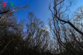 Ngỡ ngàng cảnh sắc mùa thu trong rừng ngập mặn Rú Chá