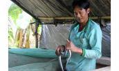 Anh nông dân kiếm bội tiền nhờ làm chuồng nuôi rắn vảy ngũ sắc