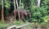 Báo Anh nói về tour du lịch thân thiện với voi đầu tiên của Việt Nam