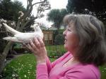 Sốc độc lạ: Đây chính là chú chim câu sống lâu nhất thế giới