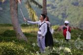 """Du khách mê mẩn """"Hoa vàng trên cỏ xanh"""" trên đỉnh Sơn Trà - Đà Nẵng"""