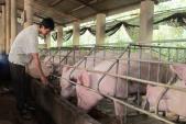 Giá thịt lợn: Đang đỉnh cao nhất, chỉ một cuộc họp lập tức tụt