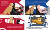 Những lưu ý khi chở vật nuôi trên xe ô tô
