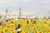 Tết Dương lịch 2019: Các khu vui chơi ở TP Hồ Chí Minh nhộn nhịp khách