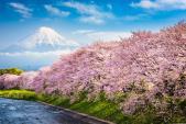5 điểm đến ngắm hoa anh đào đẹp nhất