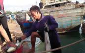 Trúng đậm cá bớp, ngư dân đảo tỏi kẻ lãi vài trăm, người thu tiền tỉ
