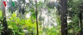 Tết rừng của đồng bào Mông Nà Hẩu - Yên Bái