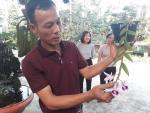 Mẩu phong lan 1 cm giá 9 triệu: Siêu lạ ở Thái Nguyên