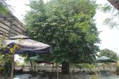 Nghệ An: Đổ xô kéo đến thắp hương