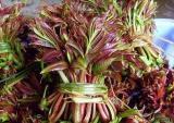 Loại cây có độc, giá ngất ngưởng khiến nhiều người muốn móc hầu bao