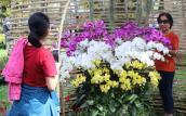 Thăm vườn lan thu 5 tỷ/năm giữa lòng Sài Gòn