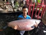 Choáng váng ngắm cá trắm đen dài 1,6m vô cùng hiếm lạ ở Hà Nội