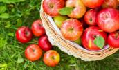 Hé lộ nguyên nhân táo nhập khẩu hàng tháng trời không hỏng, vỏ như tráng mỡ