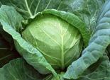 4 loại rau xanh chống ung thư cực tốt, vừa ngon vừa rẻ lại dễ dàng mua