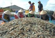 Tăng mức phạt gấp 10 lần với hành vi đưa tạp chất vào thủy sản