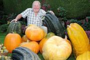 Choáng váng rau, củ quả siêu khủng trong vườn nhà lão nông