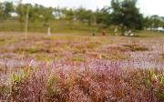 Trời mưa, mùa hội cỏ hồng Đà Lạt vẫn hút khách