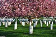 Những nghĩa trang đẹp như công viên trên thế giới