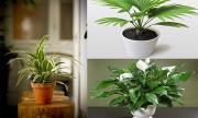 10 loại cây hút khí độc, tiêu diệt nấm mốc cực tốt