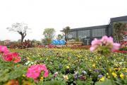 Lần đầu tiên Sầm Sơn có đường hoa dự kiến khai trương ngày 28/5 tới