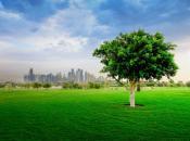 Doha – nhuộm xanh miền cát trắng
