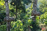 Dân săn nhà nghề dõi mắt tìm bắt ong ở ngược ngàn Hương Sơn