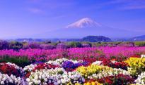 5 lý do nên du lịch Nhật Bản vào mùa hè