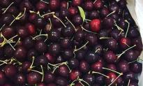 """Nghi ngại nguồn gốc quả cherry giá rẻ """"giật mình"""""""