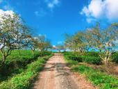 Du lịch dịp Tết: Cẩn trọng kẻo rước bực đầu năm